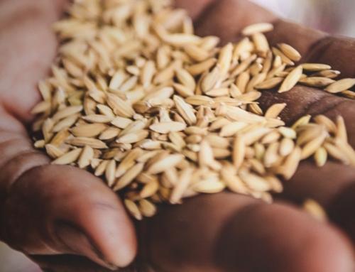 """La """"fame"""" dei Paesi poveri e l'aumento del prezzo del cibo: il conto da pagare al Covid-19"""