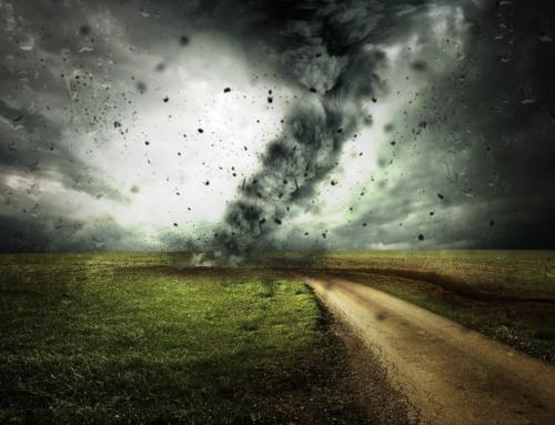 La pandemia ha messo in secondo piano la crisi climatica, afferma uno studio di Harvard